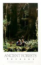 Ancient Forests Forever Poster, Gary Fiegehen