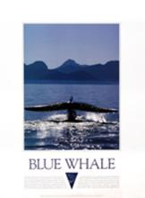 Blue Whale poster, Cootes/Roodenberg