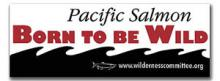 Pacific Salmon - Born to be Wild bumpersticker